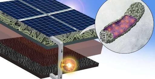Pesquisadores desenvolvem placas solares que funcionam com bactérias vivas
